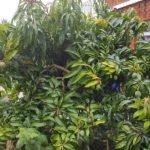 Mango, R2E2 - 2016