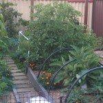 Finished & garden established summer 2013