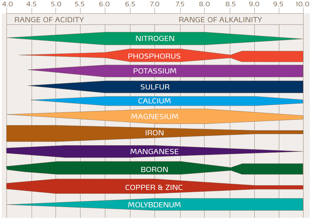 ph & nutrient availability