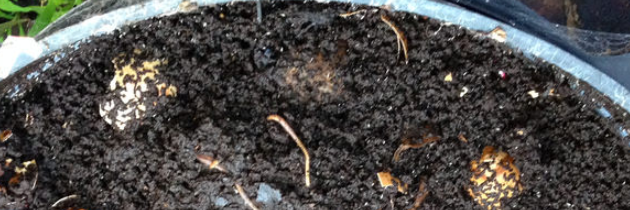 In-ground Worm Towers